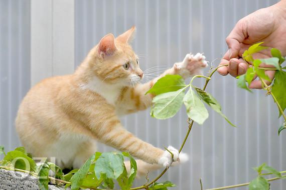 Muss Tierheim Katze Aufnehmen